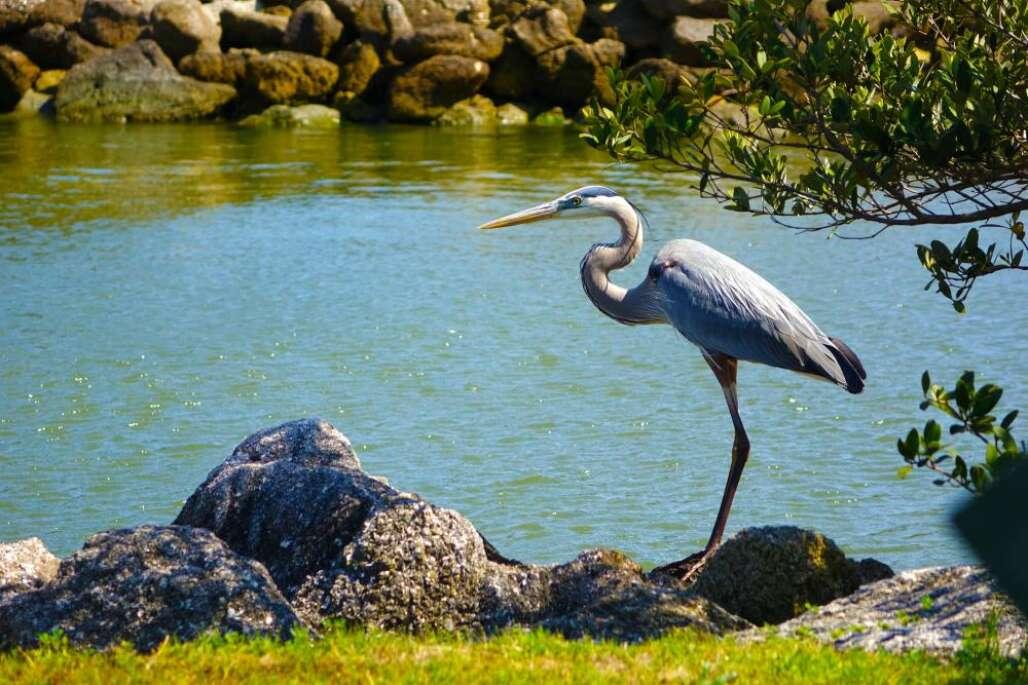 Flagler Beach Bird