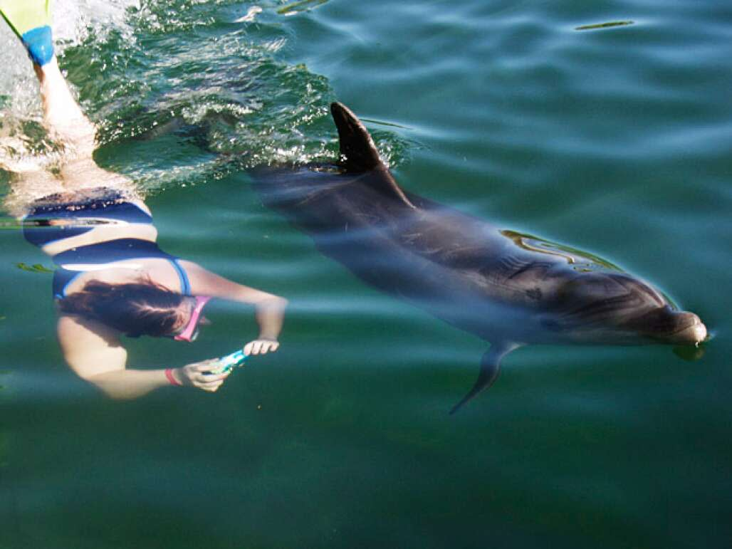 Swimming with Dolphins in Islamorado