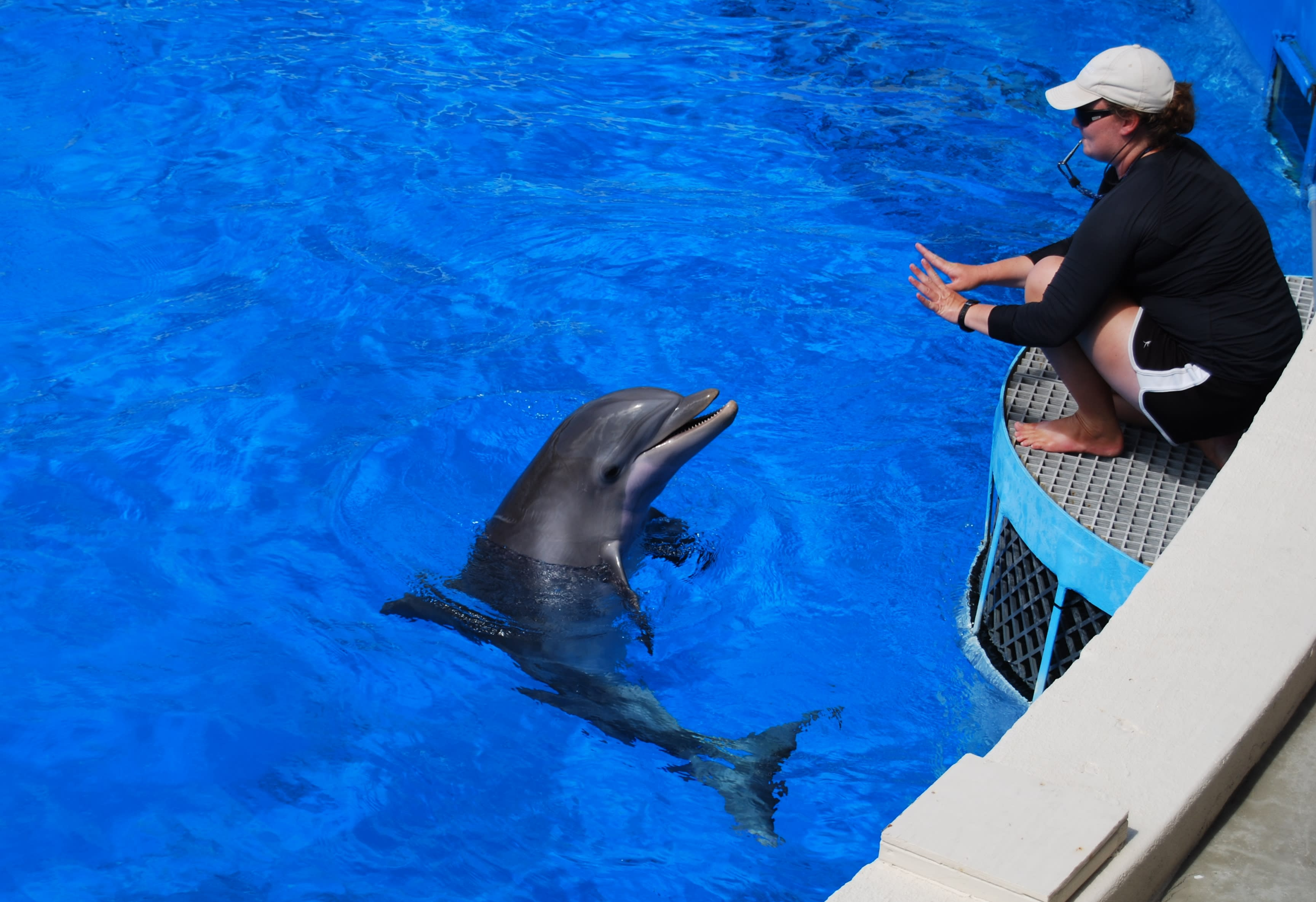 a dolphin being trained at The Gulfarium in Fort Walton