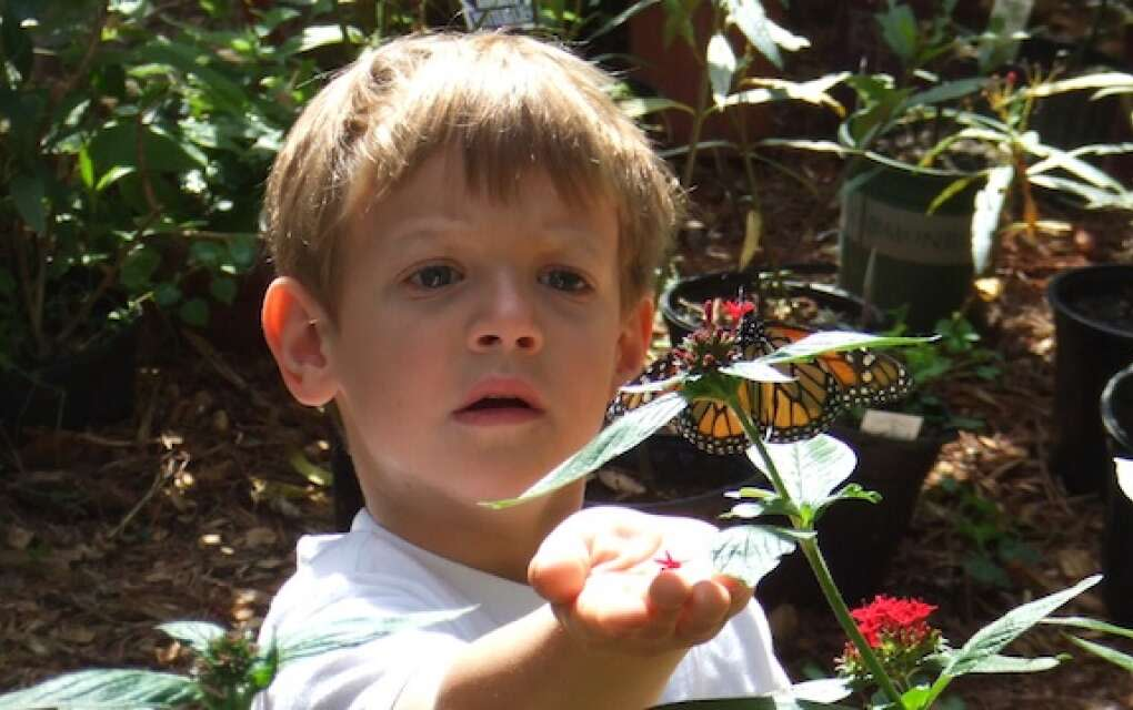 Tree Hill Nature Center is a 50-acre preserve with a butterfly garden and trails for exploring.
