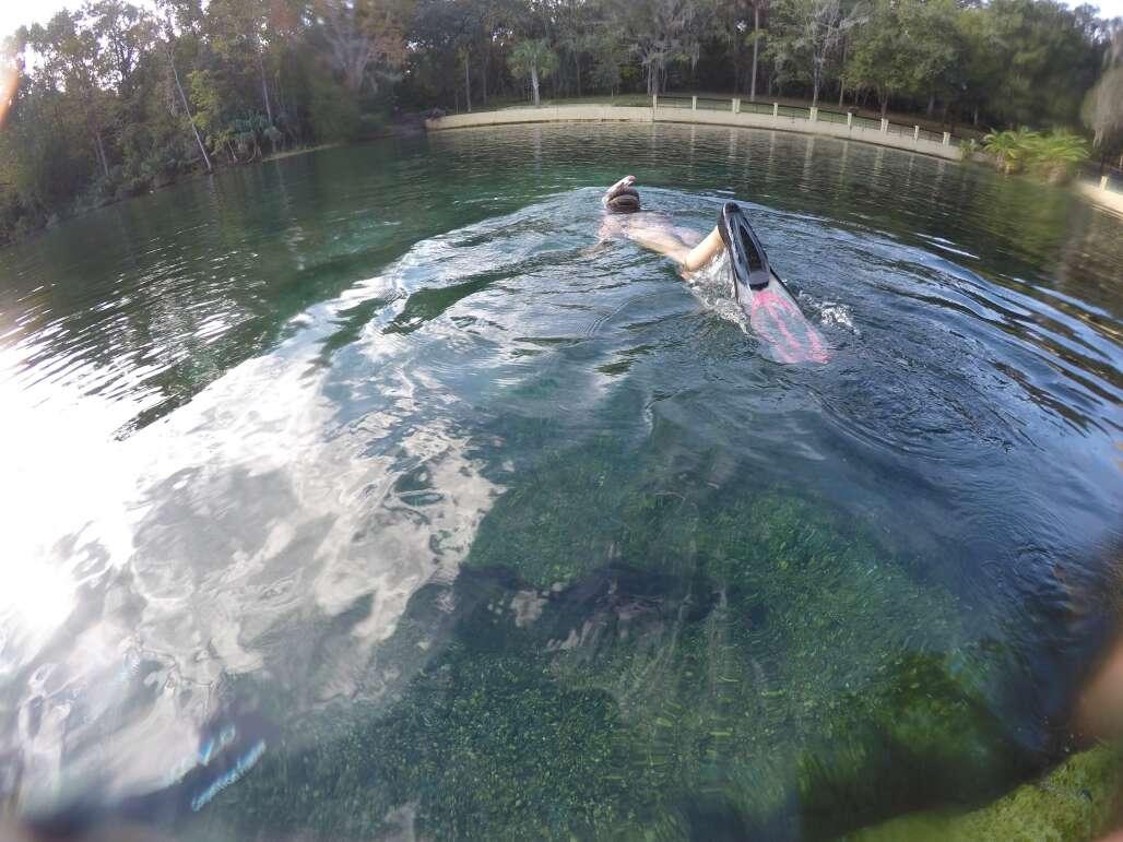 swimming area at Salt Springs, snorkeler