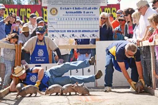 Armadillo races at the Festival near Fort Myers
