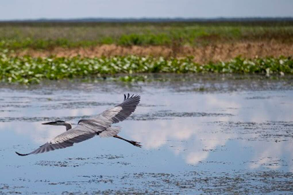 Birding at Lake Istokpoga