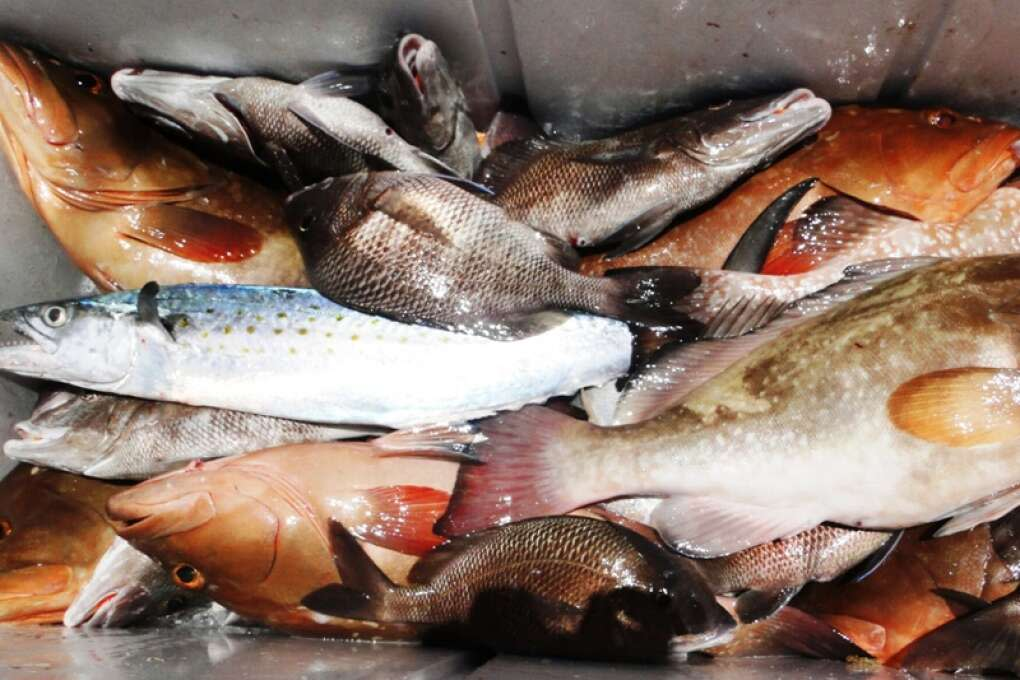 Catch some fish for dinner by going on a fishing expedition in Marathon Florida
