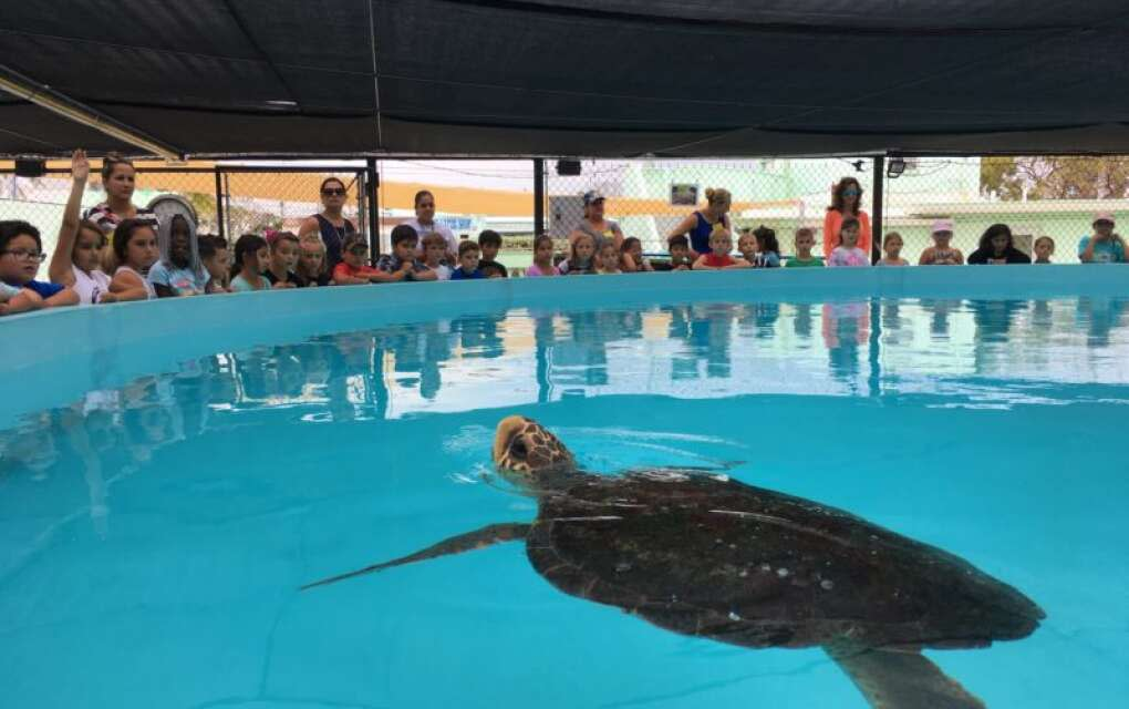 Visit The Turtle Hospital to learn more about the endangered sea creatures or sign up to attend a public turtle release on Sombrero Beach.