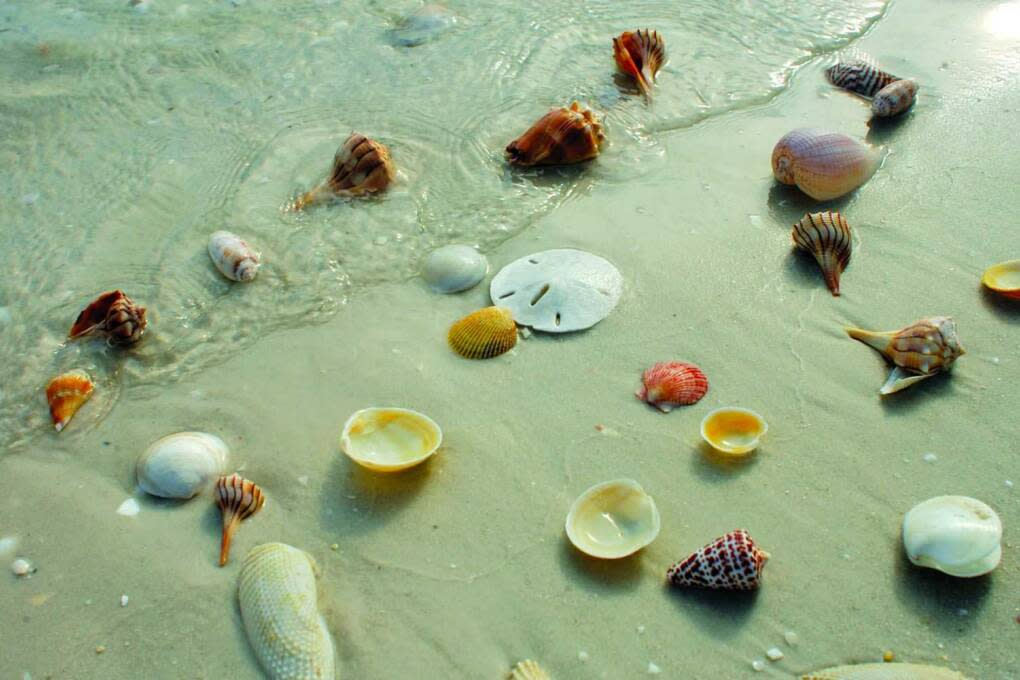 things to do in Marco Island Florida