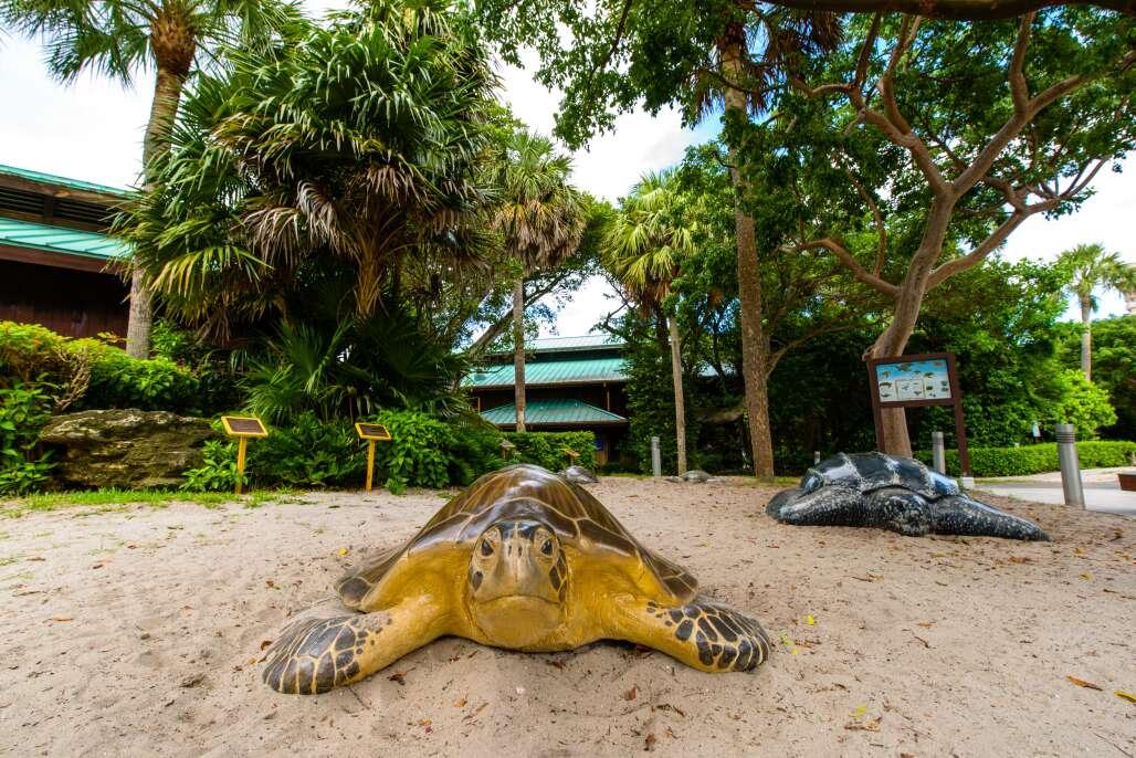Gumbo Limbo Nature Center, sea turtle
