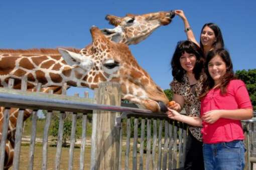 Rated one of the top 10 zoos in the U.S., Zoo Miami is 340-acre zoo that showcases more than 3,000 animals.
