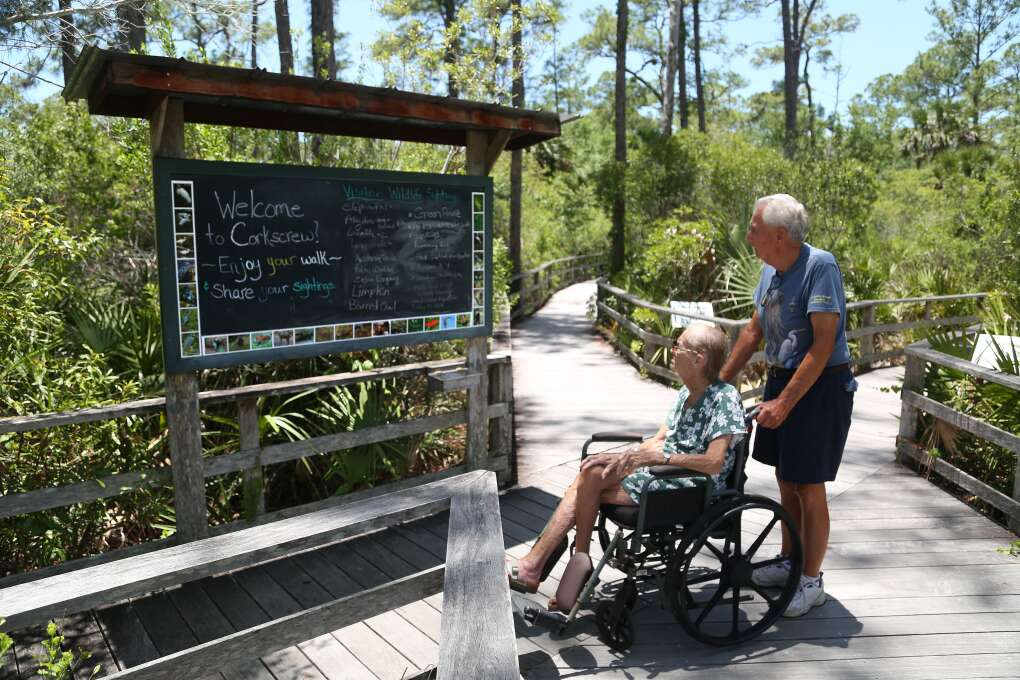 Audubon's Corkscrew Swamp Sanctuary includes a 2.5 mile boardwalk which winds through pine flatwoods, wet prairie, marsh, and the largest old growth Bald Cypress forest in North America. The boardwalk can accommodate disabled visitors in wheelchairs.