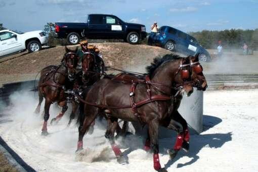 florida_horse_park_credit_lauren_tjaden (8)