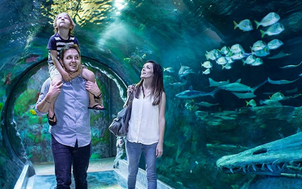 Kids can get close-up views of sharks, sea turtles and other sea creatures at Sea Life Orlando Aquarium.