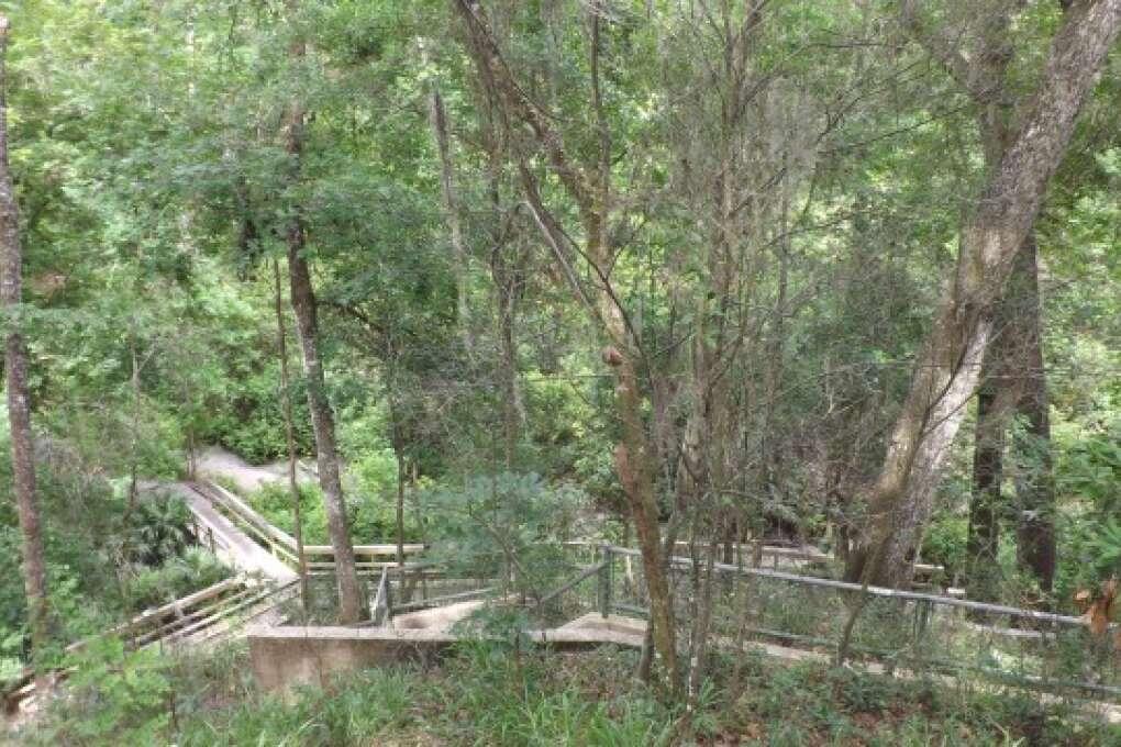 A concrete trail amidst trees