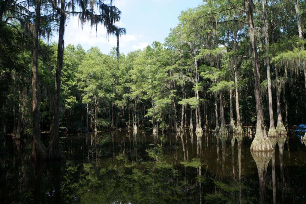 Relax and enjoy the music at Swamp Stomp
