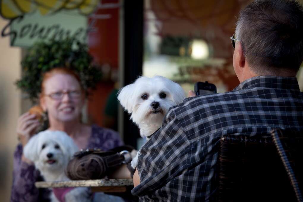 In Winter Park, there's room at the table for your best friend.