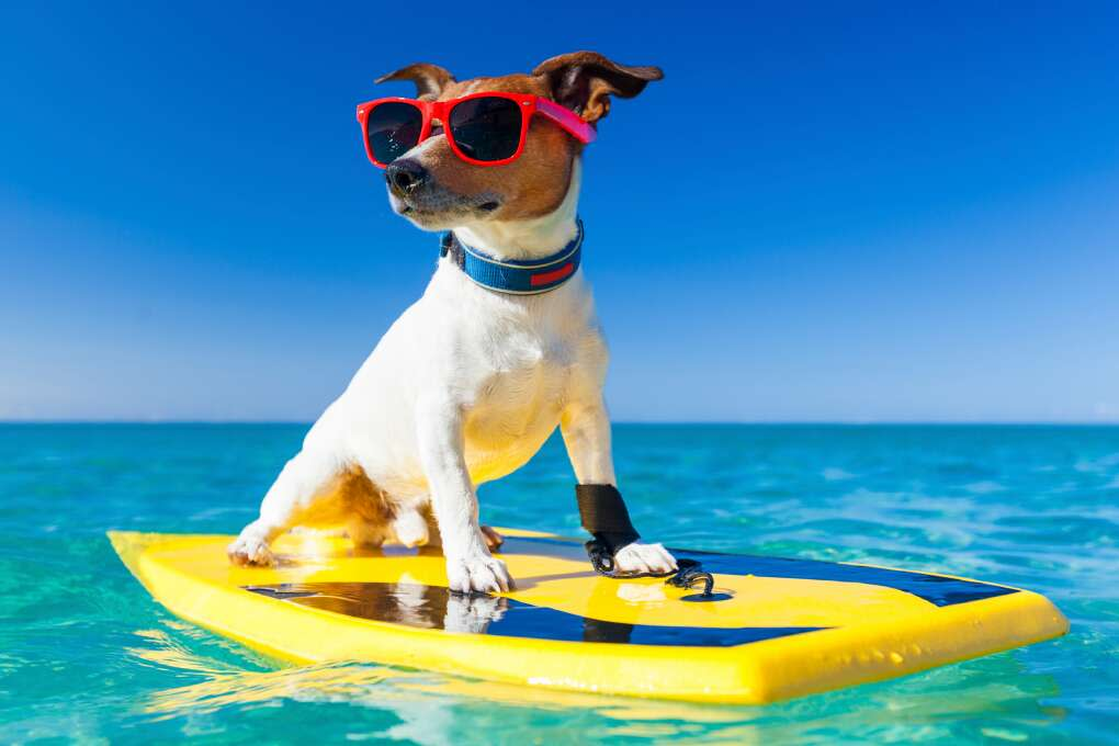 Florida goes to the dogs in the Hang 20 Surf Dog Classic in Jupiter Beach, which features doggie surfing and paddle boarding competitions as well as agility shows, doggie surfing lessons, live bands, a kids zone and good eats.
