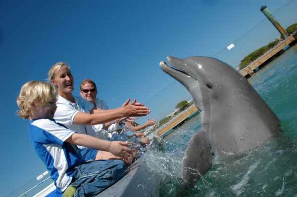 swimming with dolphins in florida