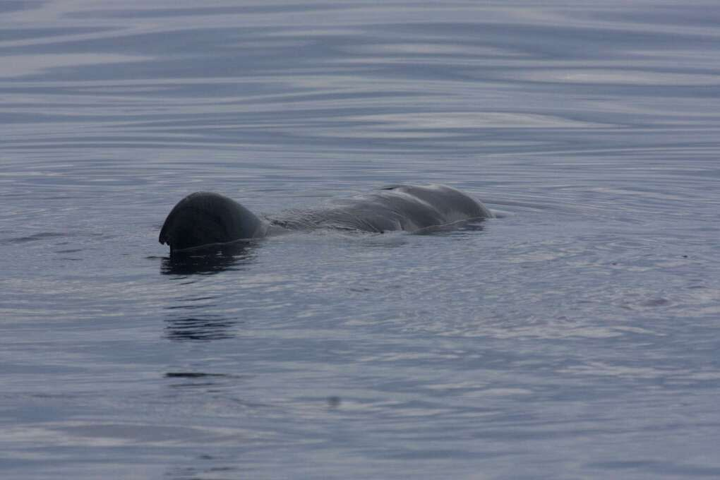 Northern Right Whale Watching in Florida