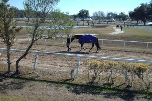 horse farms in florida