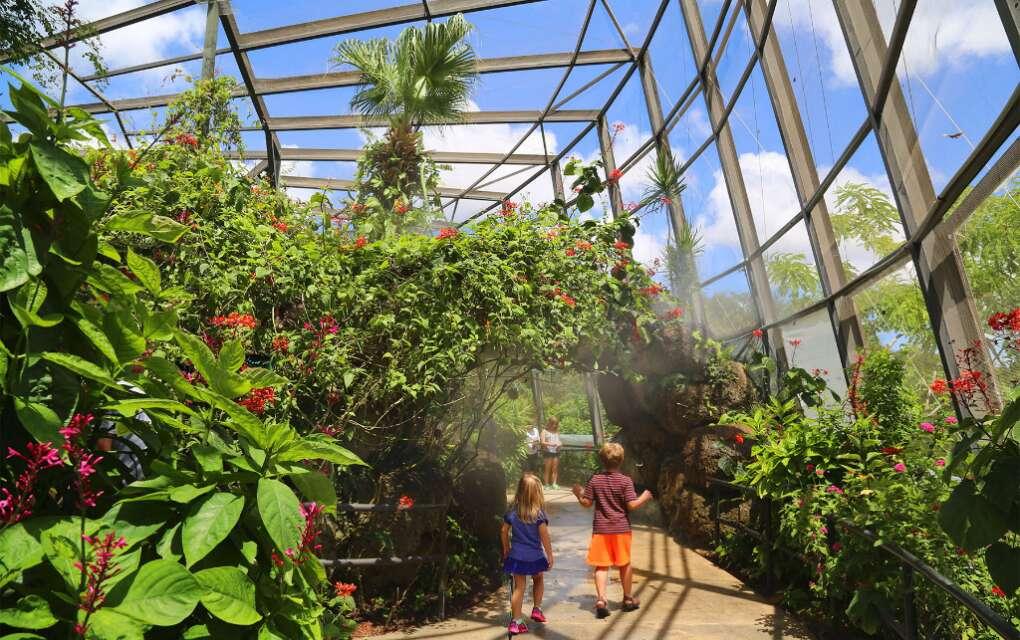 kids walk through Butterfly World in Fort Lauderdale
