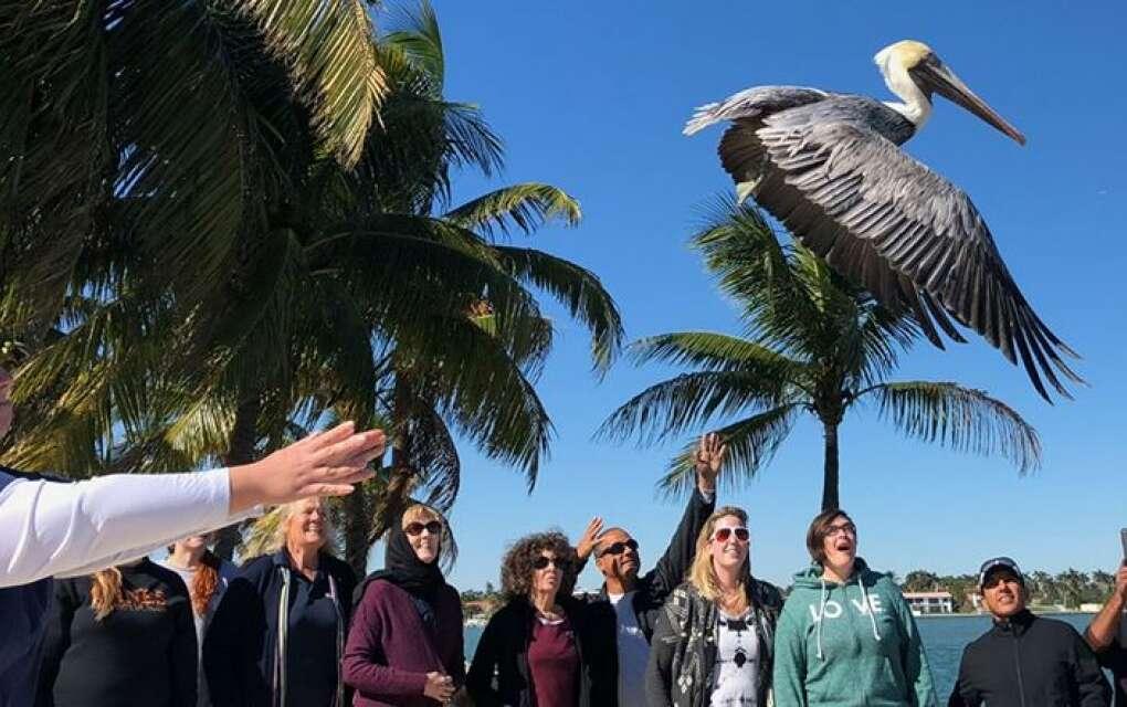 Pelican Harbor Seabird Station, releasing pelican into freedom with onlookers