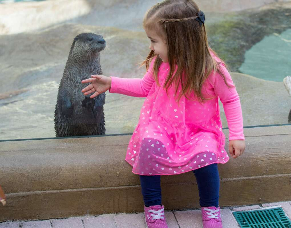 little girl outside glass at otter exhibit at Mote Marine Laboratory