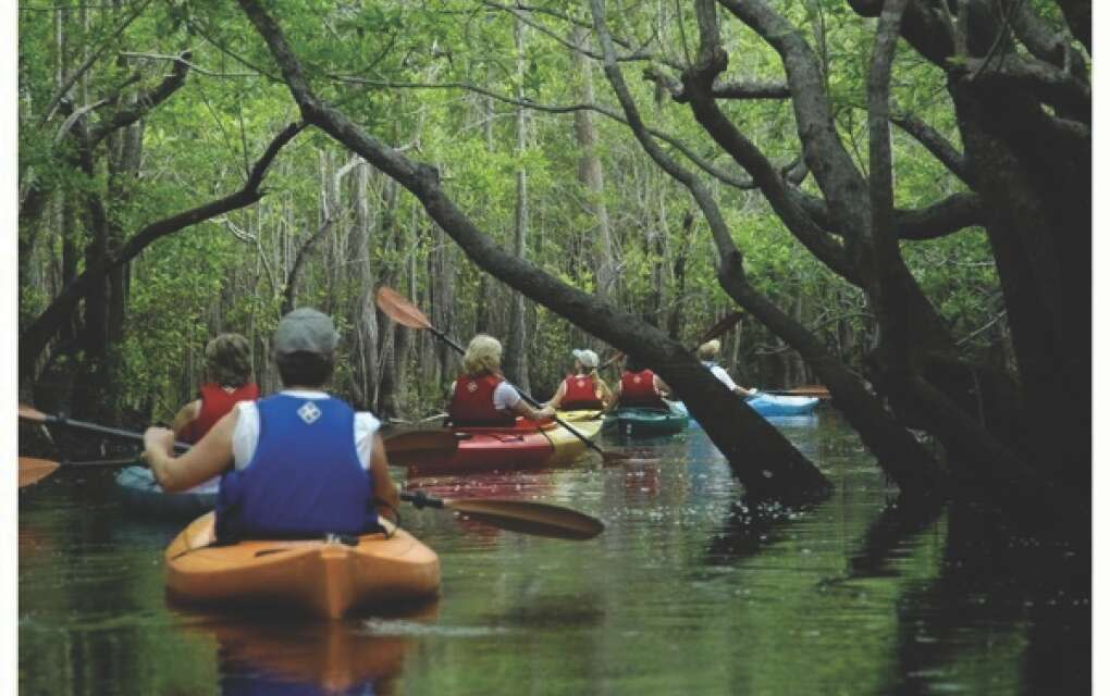 line of kayakers in trees in Tallahassee waters