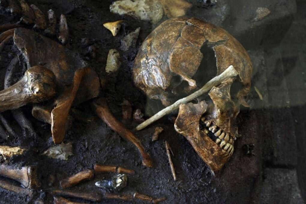 The chance finding of a human skull in Brevard County led to one of the world's most significant archaeological sites.