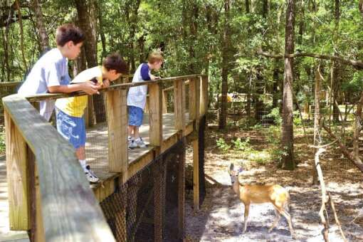 Kids at the Tallahassee Museum