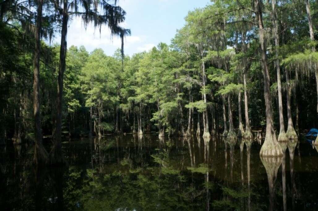 North Florida Wildlife