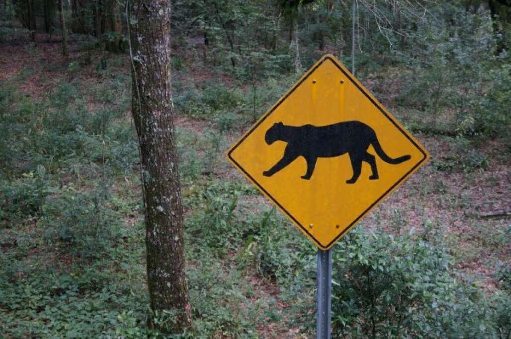 Explore the wildlife