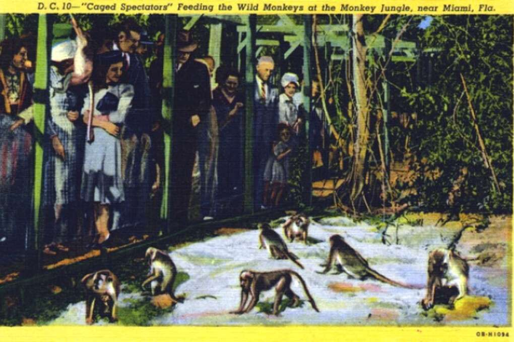 Old Florida attractions - Monkey Jungle