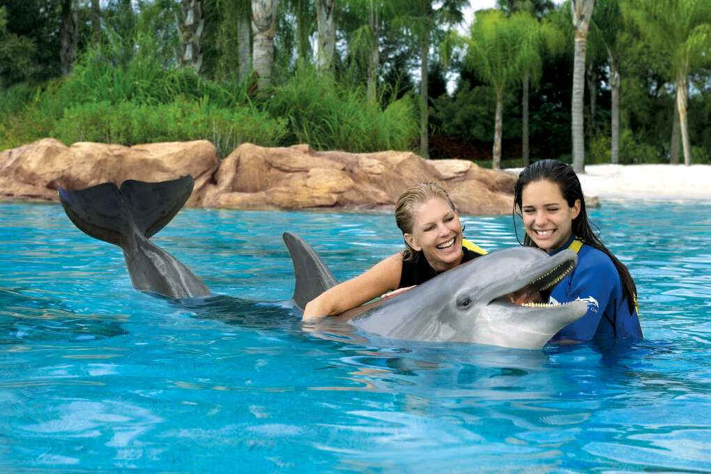 Swim with the Dolphins at Discovery Cove Orlando