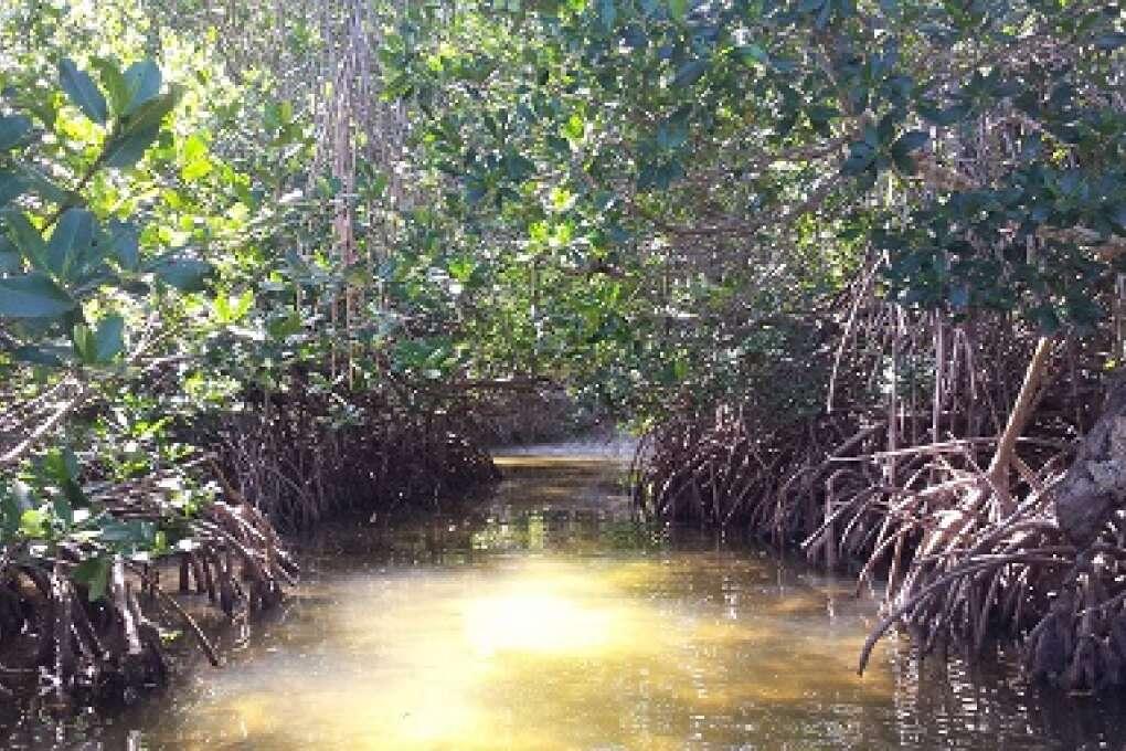 mangrove coves on Cayo Costa Island