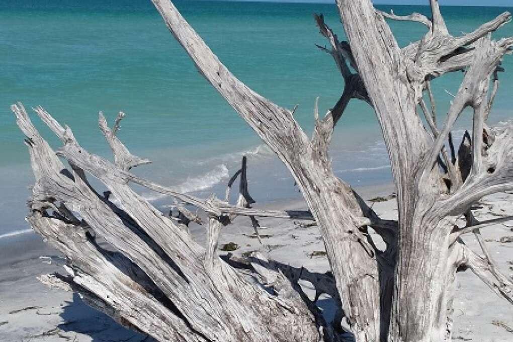 Some driftwood on Cayo Costa Island