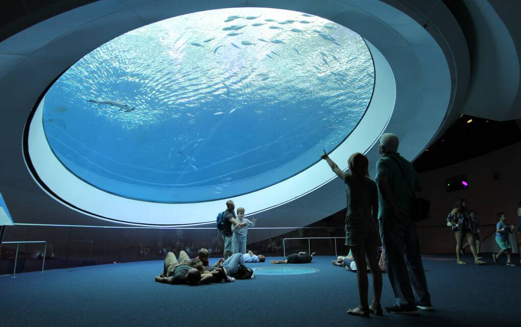 The Frost Museum of Science in Miami has a planetarium and a monster fish exhibit featuring some of the biggest creatures of the deep.