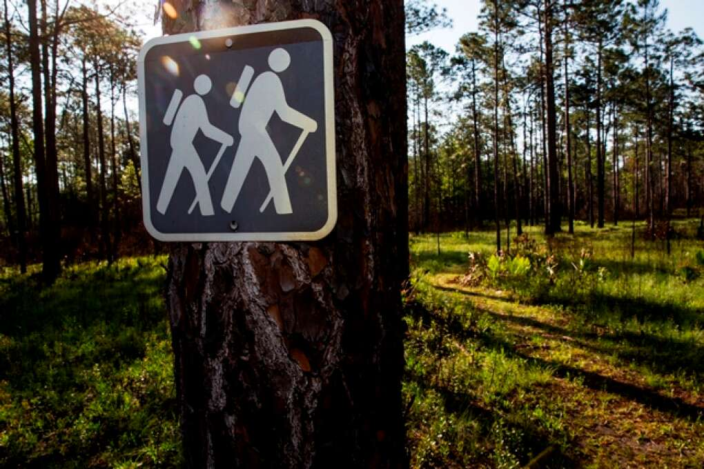hiking in Apalachicola National Forest
