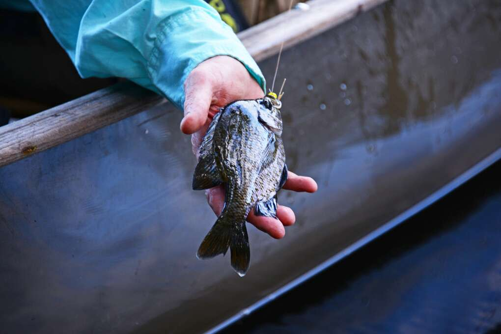 FisheatingCreek06