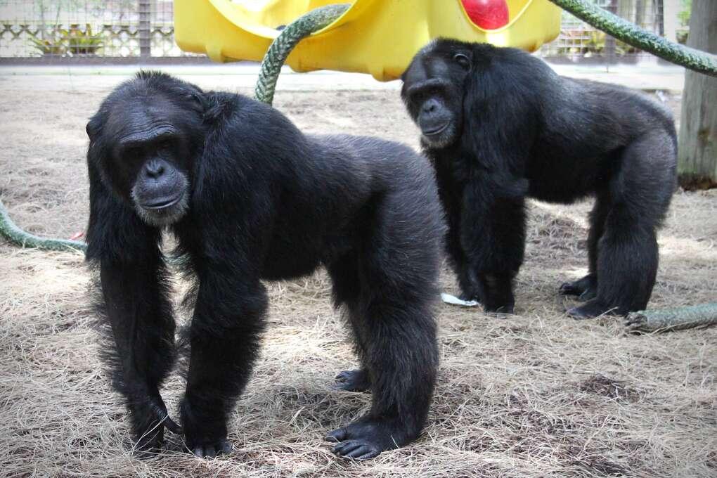 ape sanctuary florida