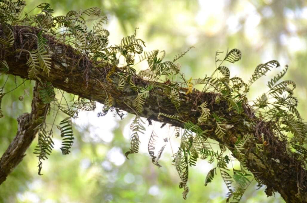 tree branch in the corkscrew swamp