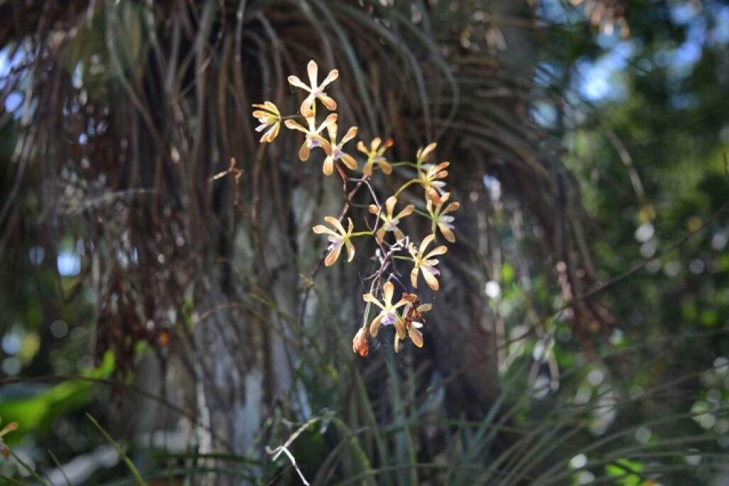 flower in the corkscrew swamp