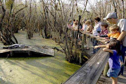 a nature trail by the Everglades river of grass