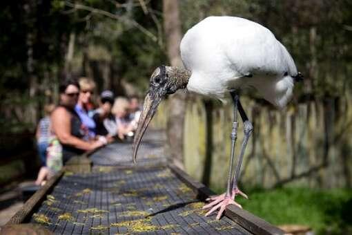 homosassa-springs-state-park-photo-crane