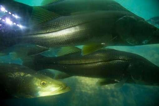 homosassa-springs-state-park-photo-fish