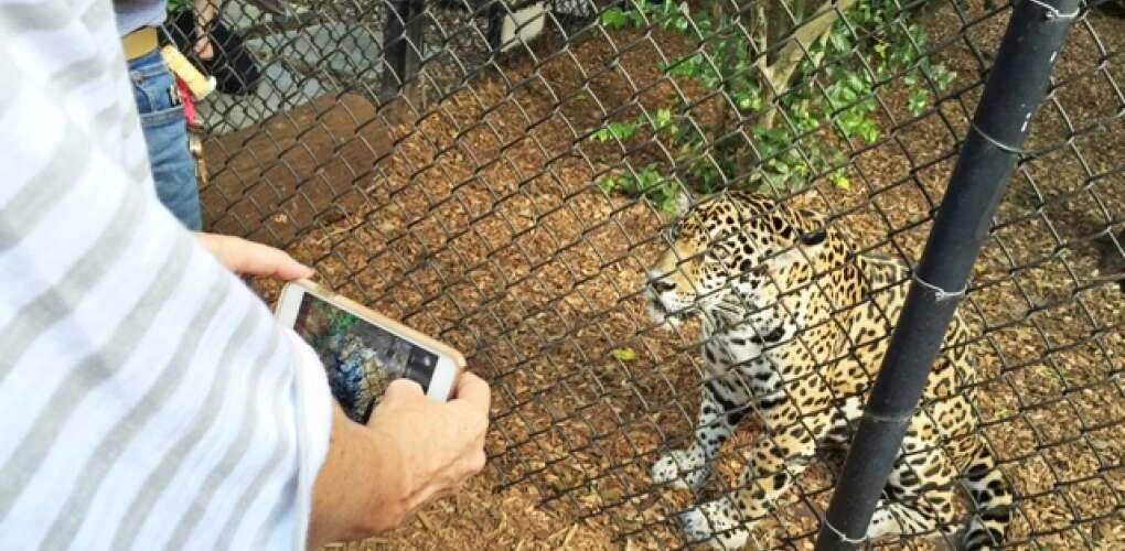 panther ridge conservation center