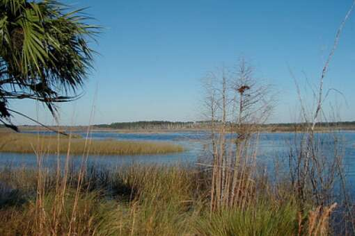 beautiful Saint Marks National Wildlife Refuge in Florida