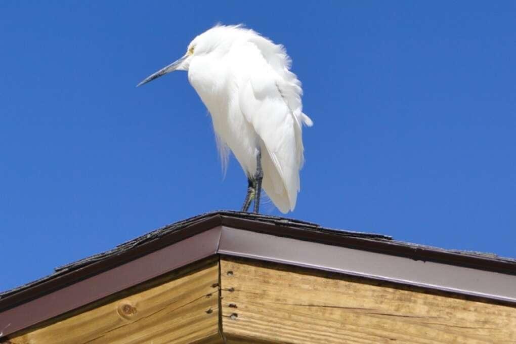 best birding in Florida destinations