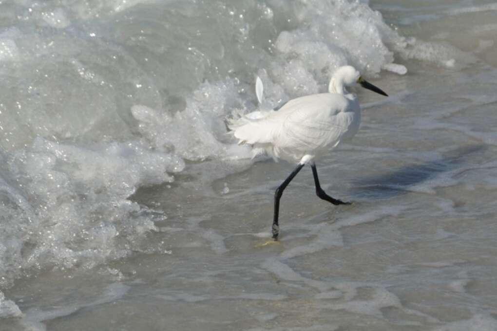 Bird Watching in Florida