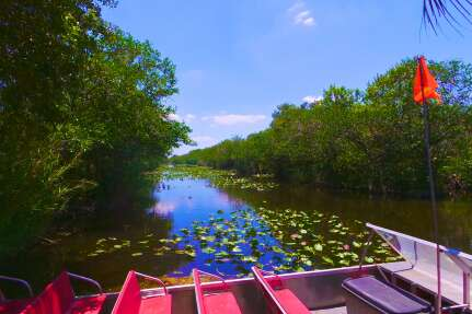 a boat tour in the Everglades