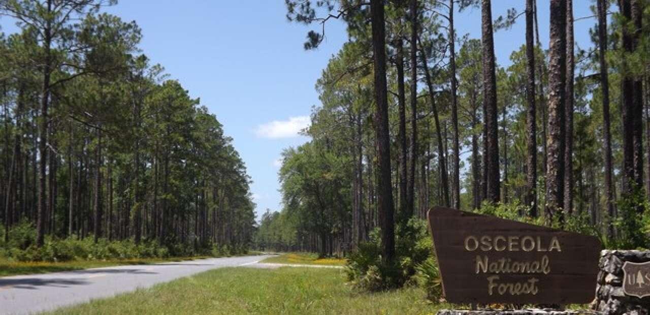Osceola National Forest sign