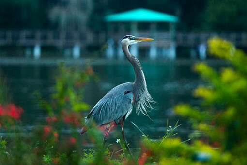 A heron checks out the surroundings near the Green Mountain Scenic Byway.